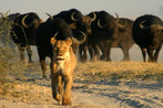chobe-national-park-chobe-national-park-the-best-wildlife-park-in-southern-africa